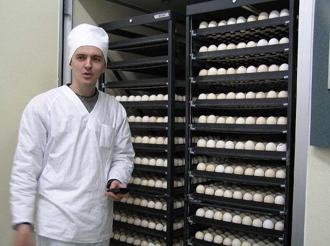 производство индейки в Ростовской области