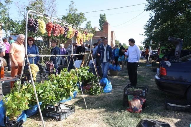 саженцы винограда на Донской лозе-2015