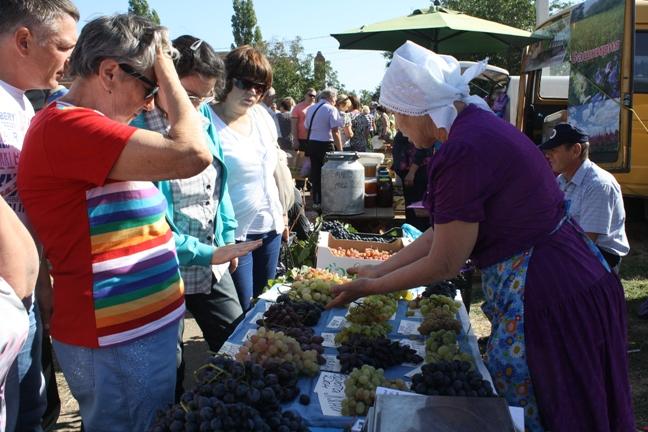 продажа винограда на Донской лозе-2015