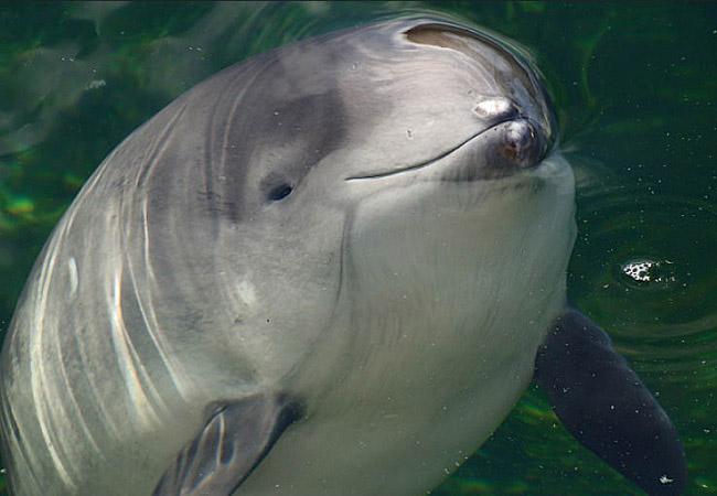 дельфин-азовка1