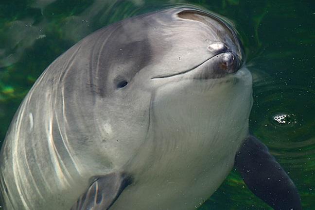 дельфин азовка
