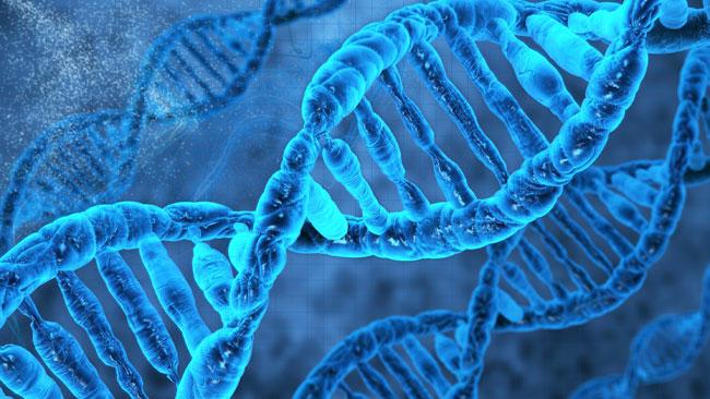 с-сайта-genom.by
