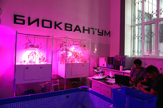 биоквантум