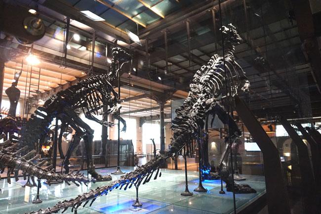 Динозавры,-которые-за-стекл