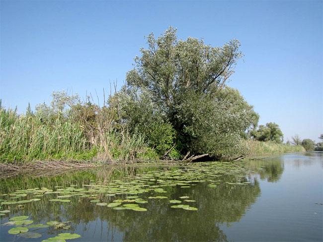 Дельта Дона, природному парк Донской, водние лилии, фото Веры Волошиновой