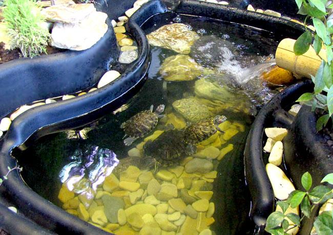 Басейн с черепахами, парк живых бабочек, Ростов-на-Дону, фото Веры Волошиновой